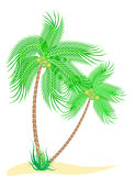 Coconut Trees. Raster illustration of two coconut trees isolated on white Royalty Free Stock Images