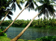 Coconut trees. Tropical coconut lagoon river scenic Stock Images