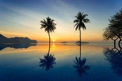 Coconut trees agains sunrise off of the sea Stock Image