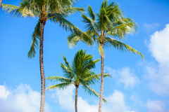Coconut trees against beautiful blue skies. tropical setting. Royalty Free Stock Photography
