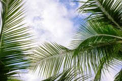 Coconut trees against blue sky. Palm trees at tropical coast. stock photography
