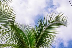Coconut trees against blue sky. Palm trees at tropical coast. stock photos