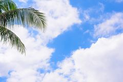 Coconut trees against blue sky. Palm trees at tropical coast. stock image