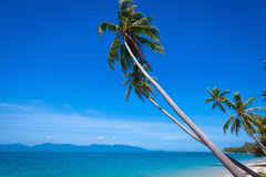 Coconut trees against the sky Stock Photo
