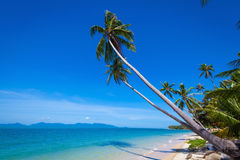 Coconut trees against the sky Royalty Free Stock Photo