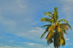 Coconut trees with amazing white clouds and blue sky background stock image