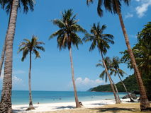 Coconut Trees in Angthong NP, Thailand Stock Image