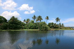 Coconut trees and backwaters of Kerala, India. Stock Photography