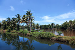 Coconut trees and backwaters of Kerala, India. Royalty Free Stock Photos