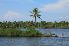 Coconut trees and backwaters of Kerala, India Royalty Free Stock Photography