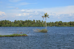 Coconut trees and backwaters of Kerala, India Royalty Free Stock Photos