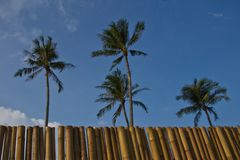 Coconut trees and bamboo wall Royalty Free Stock Photos