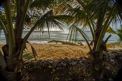 Coconut trees on Barbados North West Coast with the calm blue waters of the Caribbean sea in the background Royalty Free Stock Photos