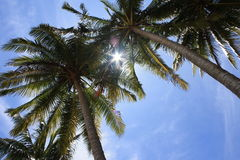 Coconut Trees on Beach stock images