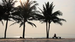 Coconut trees on the beach. The Coconut trees on the beach stock video