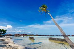 Coconut trees at the beach Royalty Free Stock Image