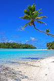 Coconut Trees on a Beach at One Foot Island, Aitutaki Cook Islands Stock Photo