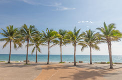 Coconut trees. Royalty Free Stock Image