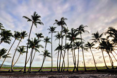 Coconut trees Royalty Free Stock Photography