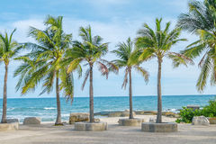 Coconut trees. On the beach Royalty Free Stock Photos