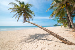 Coconut trees on beach against blue sky Stock Image