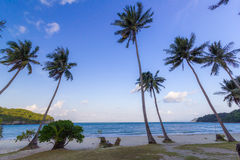 Coconut Trees on a beach Royalty Free Stock Image