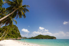 Coconut Trees on a beach Royalty Free Stock Images