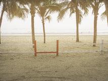 Coconut trees on the beach Royalty Free Stock Photo