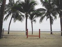 Coconut trees on the beach Stock Photos