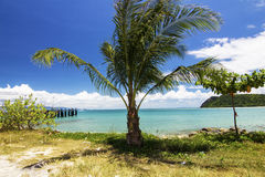 Coconut trees on the beach Stock Images