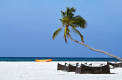 Coconut trees and beach couches Royalty Free Stock Images