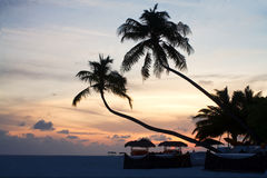 Coconut trees and beach couches Royalty Free Stock Photography