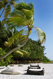 Coconut trees and beach couches Royalty Free Stock Photos