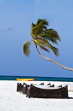 Coconut trees and beach couches with blue sky Stock Photography