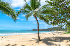 Coconut trees on the beach Stock Photos