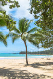 Coconut trees on the beach Royalty Free Stock Photos