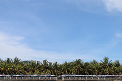 The coconut trees with beach umbrella under blue sky Royalty Free Stock Photography