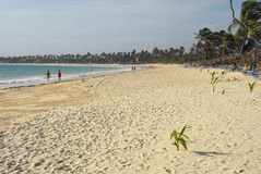 Coconut trees on beaches Stock Photos