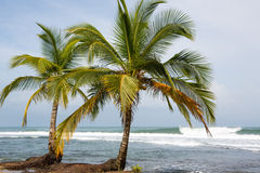 Coconut trees and big sea waves in Panama Royalty Free Stock Photography