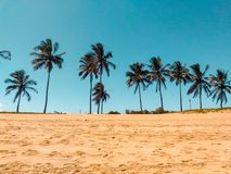 Coconut Trees on Brown Sand stock image