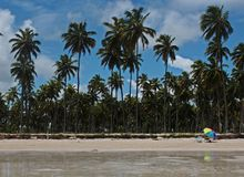 Coconut trees in Carneiros beach in Pernambuco Brazil. Carneiros beach in Pernambuco Brazil. Landscape with coconut trees, sea, mirrored colorful umbrella and royalty free stock images