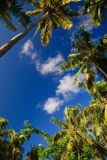 Coconut trees couple Royalty Free Stock Photography