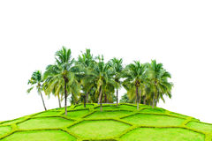 Coconut trees and field of beautiful grass  isolated on white background with clipping path Stock Photography