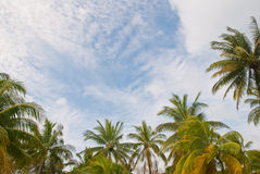 Coconut trees frame Stock Images