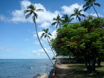 Coconut trees hang over stone path along cliff shore next to sha Stock Images