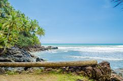 Coconut trees, intense vegetation and large rocks in contact with the sea. Fallen wooden trunk used as bench in the foreground. Coconut trees, intense stock photography