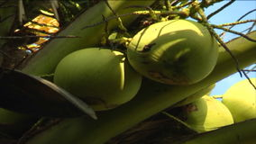 Coconut trees on the island stock video footage