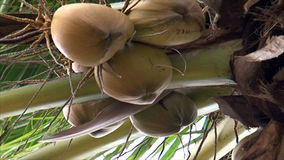 Coconut trees on the island stock video