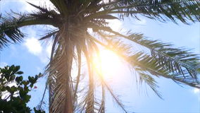 Coconut trees on the island stock footage