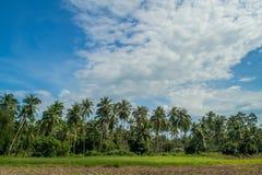 Coconut trees. In Koh Samui Island Thailand Stock Photo